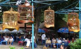 Saigon vogeltjes cafe