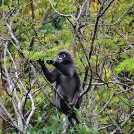 Taman Negara Perlis - aap