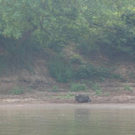 Nong Khiaw - varkenshouderij langs Nam Ou rivier