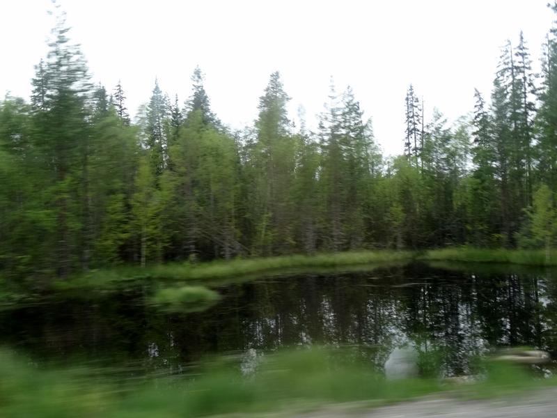 Rabocheostrovsk naar Pushkin - vennetjes, moerassen en bossen (5)