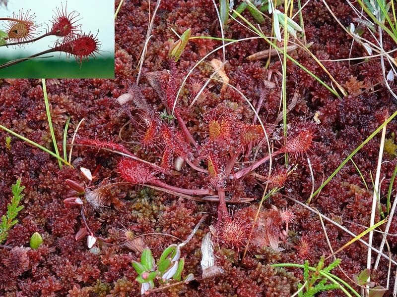 Soomaa national park - vleesetende planten